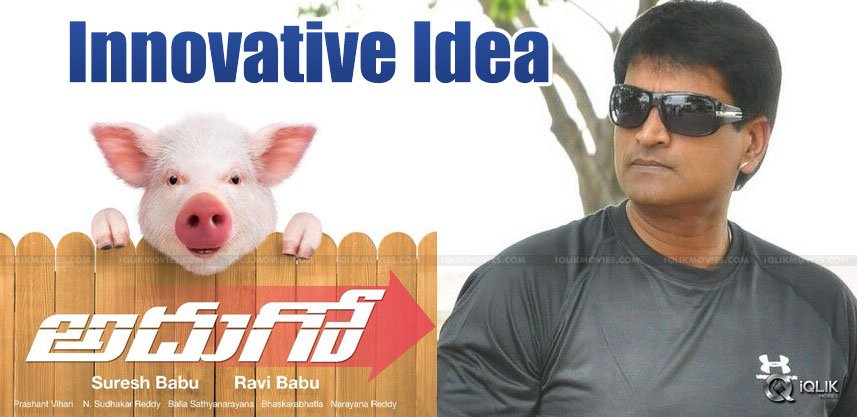 piglets-walking-as-part-of-movie-promotion