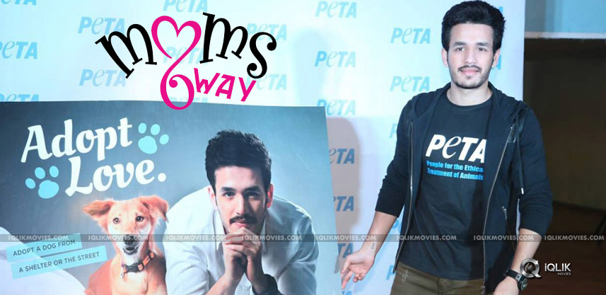 hero-akhil-at-peta-event