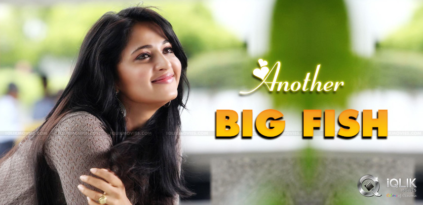 raghavendra-rao-son-narrates-story-to-anushka