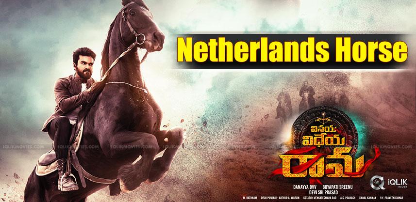 netherlands-horse-for-ram-charan