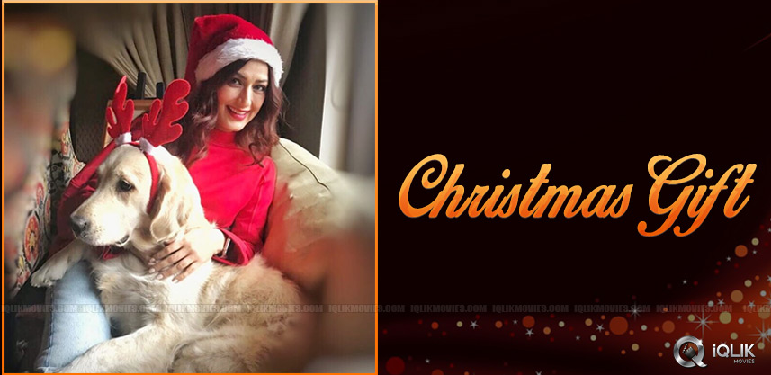 sonali-bendre-christmas-photo-shoot-details-