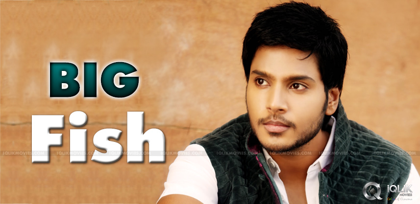 sundeep-kishan-upcoming-bilngual-film