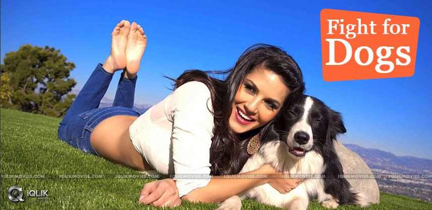 sunny-leone-fight-for-street-dogs-with-peta