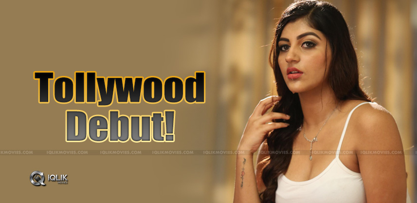 Buxom-Baby-To-Make-Debut-In-Tollywood