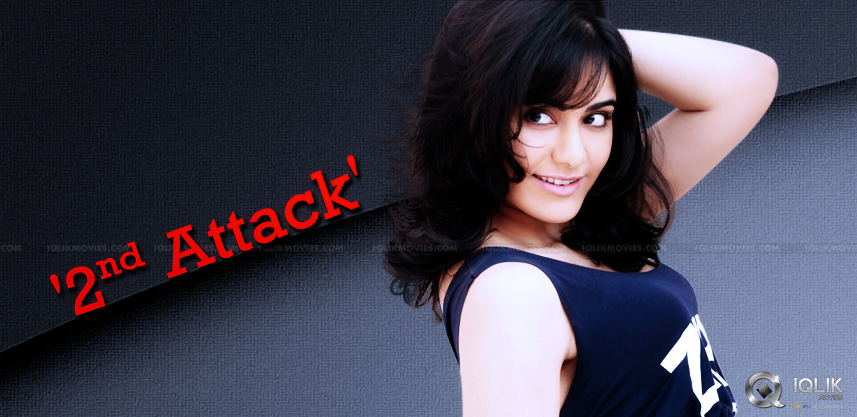 adah-sharma-next-film-with-hero-aadi-