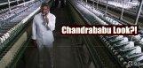 jagapathibabu-look-in-bhairavaa-details