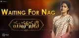 mahanati-akkineni-family-no-praises-why