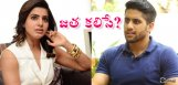 speculations-on-chaitanya-samantha-living-together