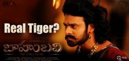 specualtions-about-real-tiger-in-baahubali-shoot