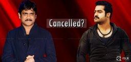 jr-ntr-nagarjuna-multi-starrer-cancelled