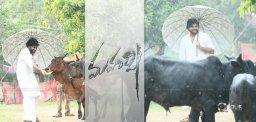 pawan-kalyan-govulatho-gopala