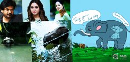 Celebrities Heartbroken With The Elephant's Death In Kerala