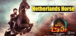 netherlands-horse-for-ram-charan