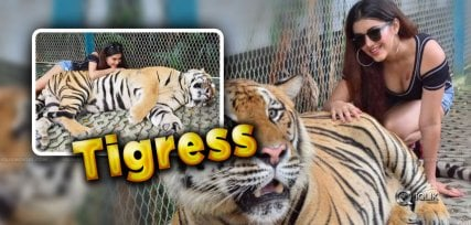 malvika-singh-cleavage-tiger-pic